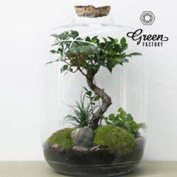 green_g